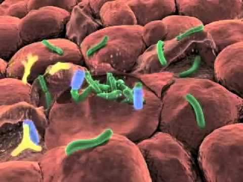 Probiotics - A quick trip inside our guts!