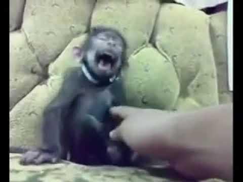 Oruç Tutan Maymun  #1 (Antep Dublaj)