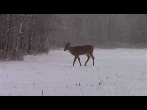 Deer Hunting 2018 Saskatchewan
