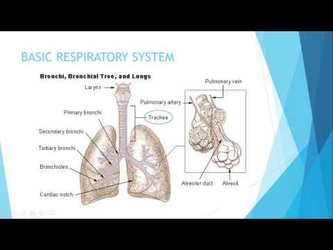IGCSE BIOLOGY REVISION - [Syllabus 11] Gas Exchange In Humans