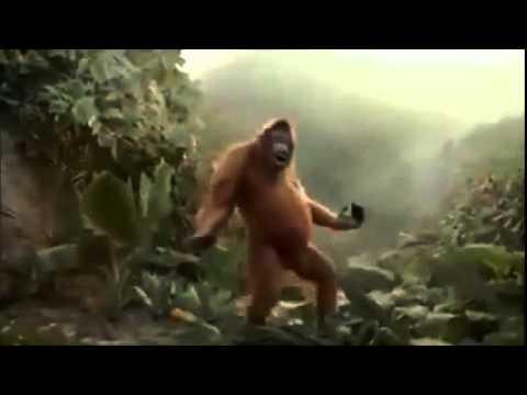 Affe tanzt
