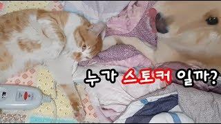 길냥이를 처음본 강아지 반응? (CAT & DOG 1화)