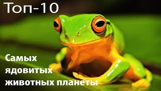 Топ 10 Самых ядовитых животных на планете. Смертельно опасные животные.