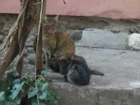 niedliche-kätzchen