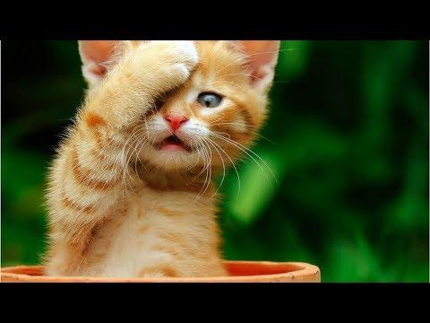 funniest Kittens videos/best cat compilation/funny animal world/2018