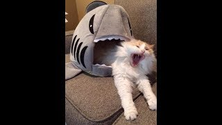Funny cats -  Try not laugh - Compilation - 2018