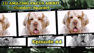 Top 10 amazing facts about Clumber Spaniel. #whiskey #pug #dog