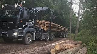 Transport Leśny Leśny włóczykij