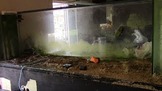 400G REEF FISH EXPLODED TANK CRASH SILICONE FAIL WORST DAY EVER