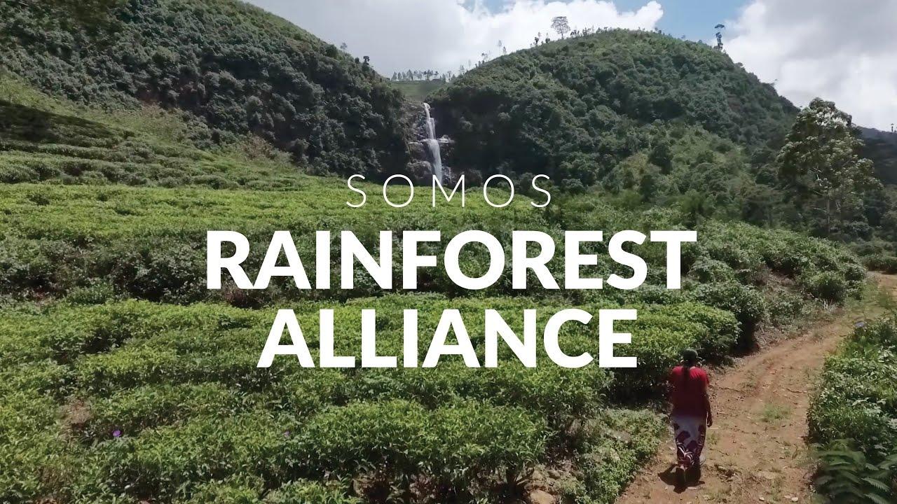 Somos Rainforest Alliance - YouTube
