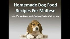 Homemade Dog Food Recipes for Maltese