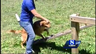 Search And Rescue Dogs Trained In Gilroy Now Heading To Nepal