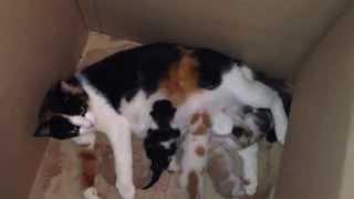 Кошка пришла под нашу дверь родить котят )))