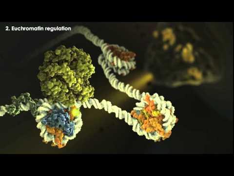 Epigenetics Overview