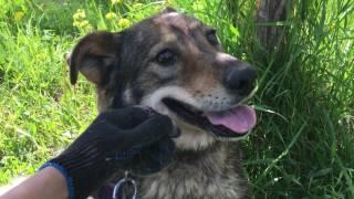 Дикая собака из приюта в Щербинке