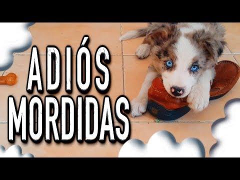 EXTINGUIENDO mordidas, destrozos y MALAS conductas de mi perro - MartGon