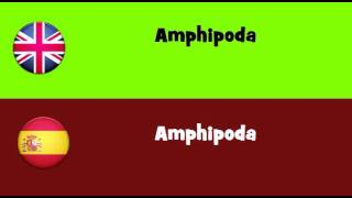 FROM ENGLISH TO SPANISH = Amphipoda