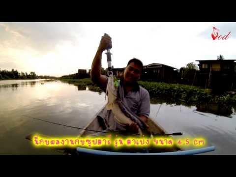 ตกปลาชะโดที่แม่น้ำท่าจีน