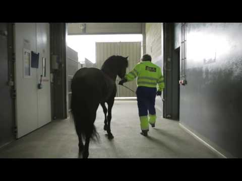 Horse riding trip with Icelandair Cargo