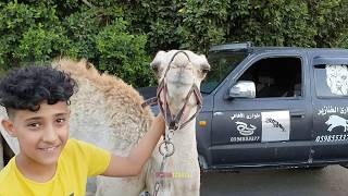 بعد هروب القعود 3 مرات من المزرعه اعدناه الينا مع جمال العمواسي