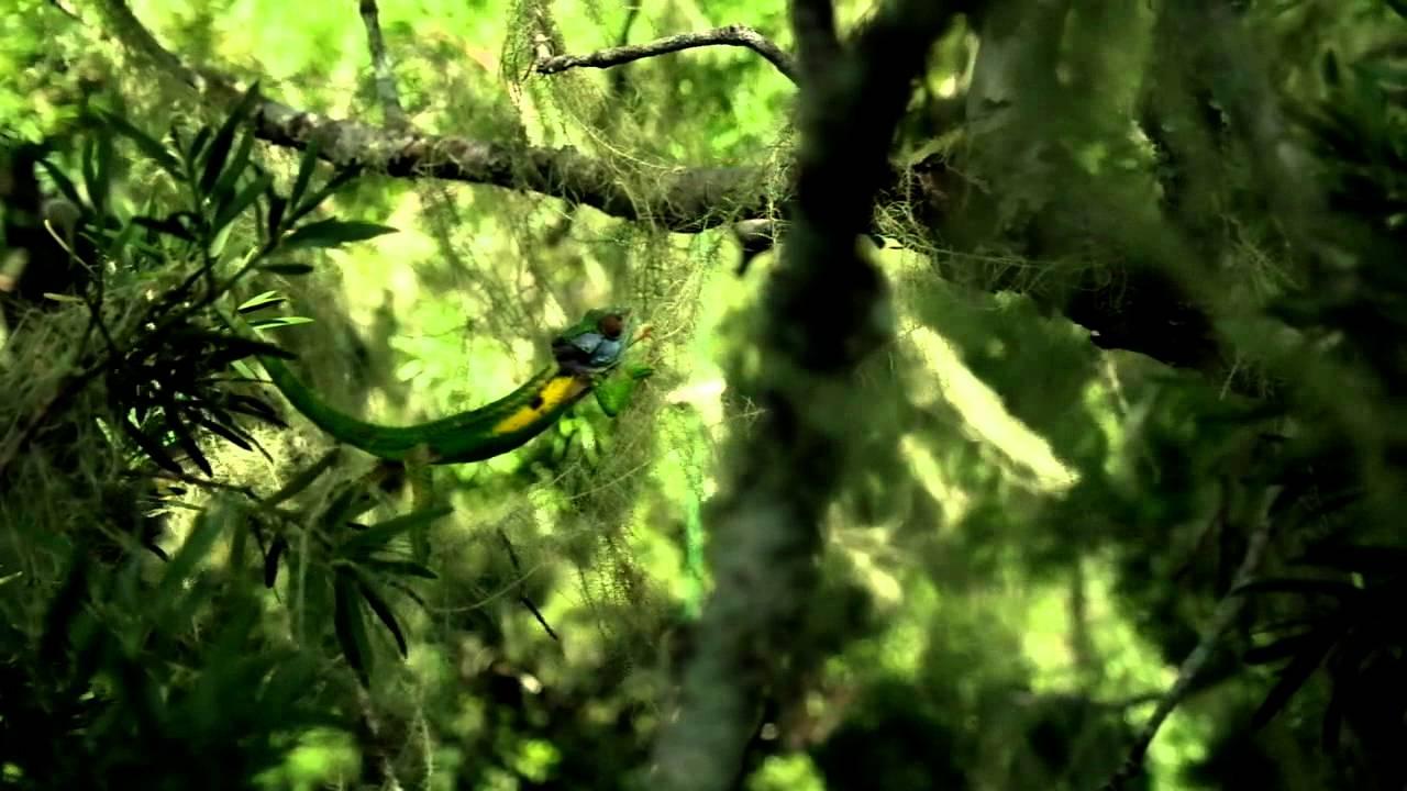 chameleon Traverse
