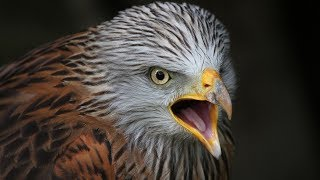 أخطر 10 طيور فى العالم , أهرب فور رؤيتها .. !!