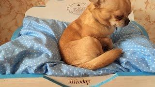 Элитная кроватка для маленькой собаки