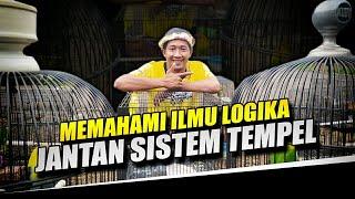 Download lagu Cara penggacoran Love bird jantan sistem Tempel