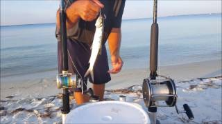 How to catch blacktip sharks in the bay