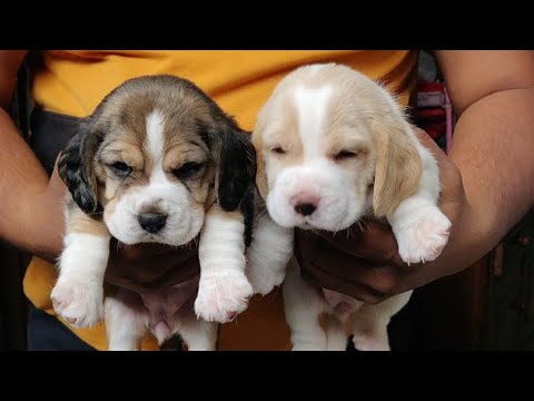 DOG UNDER 10000/DOG PRICE IN INDIA 2018/ DOG PRICE LIST FROM 2000 TO 10000 IN INDIA...