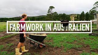 FARMWORK IN AUSTRALIEN // Work & Travel Australien #66