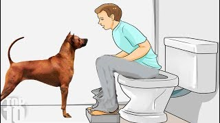 THIS IS WHY YOUR DOG FOLLOWS YOU INTO THE BATHROOM