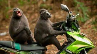 Приколы с животными. До слез. Funny animals. #смешныеживотные #funnyanimals