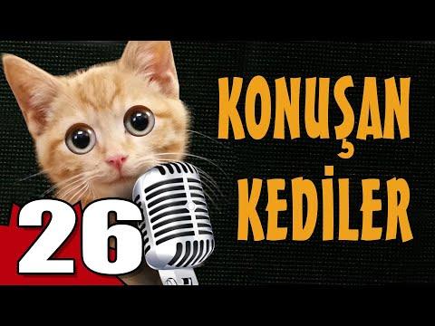 Konuşan Kediler 26 - En Komik Kedi Videoları