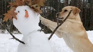 Cold Hearted Stella Destroys a Snowman