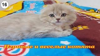 Игривые и веселые котята