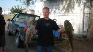 Imperial valley catfish tournament slide 3