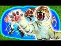 Learn Wild Zoo Animals and Sea Animals in the bath Cartoon 2D