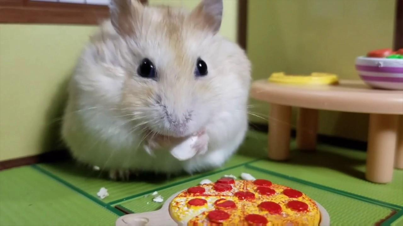 Hamstervid