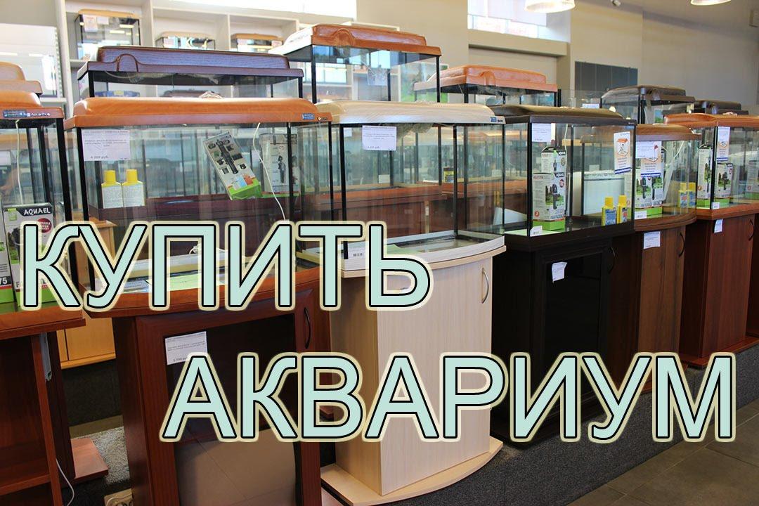 Купить крупных золотых рыбок оранд и жемчужинок в Петербурге - YouTube