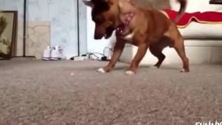 猫と犬:レーザーポインターを追うおかしい猫と犬|面白いペットビデオ ....