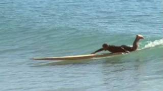 Tom Wenger surfs 16 ft Toothpick! - Nathan Oldfield