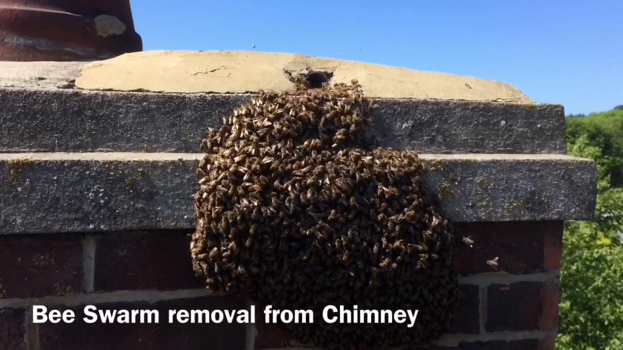 How to remove a chimney - Bee Removal From Chimney