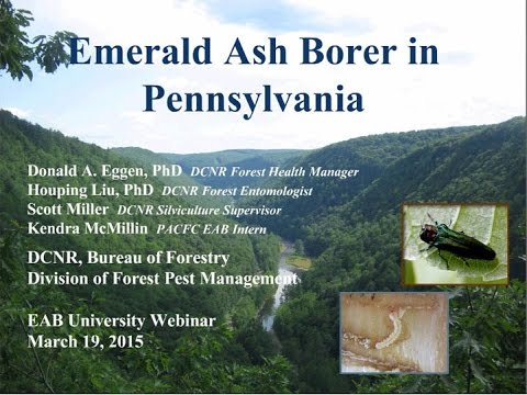 Developing EAB & Ash Management Plans for PA.