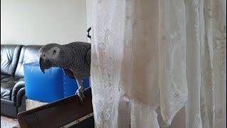 에어컨 끄기싫은 앵무새
