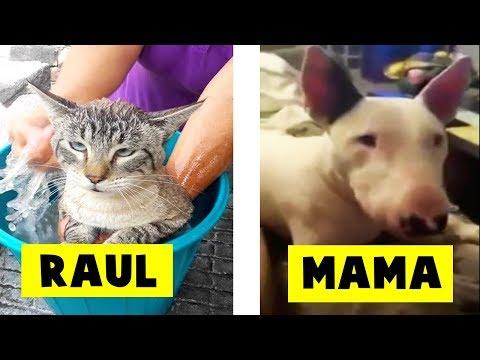 5 Animales Hablando Captados en Cámara en la Vida Real