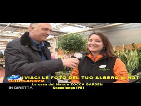 Di Tutto Di Piu Zocca Garden Venerdi 13 Dicembre 2019 Youtube