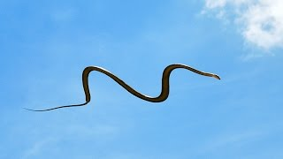 Rare flying snake spotted in Coimbatore | Latest Tamil News