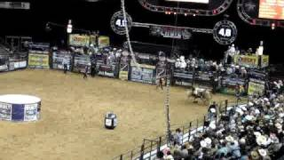 Baixar Rodeo in Oakland - When Animals Attack