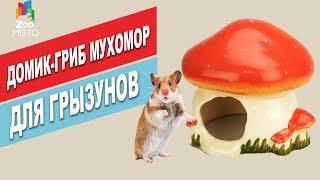Домик-гриб мухомор для грызунов | Обзор домика-гриба для грызунов | The house-mushroom for rodents